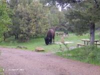 Teddy2013-bisoncamp2.jpg
