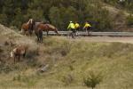 Horses & cyclists